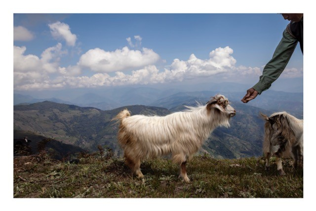1. Goat on Mt. Gobre basic magazine